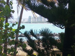 San Juan apartment photo - View through the pine tree and sea grape bush to the Isla Verde Beach.