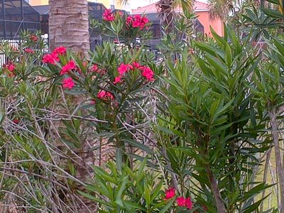 Beautiful flowers and shrubs throughout the resort.