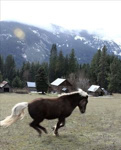 spring silly horse in upper pasture
