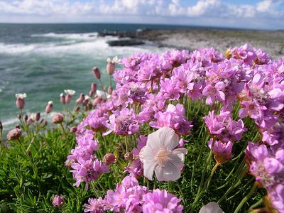 Burren flowers (Photo: Code Poet)