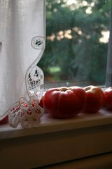 Nashville cottage photo - Ripe tomatoes in the kitchen window- fresh basil out the back door!