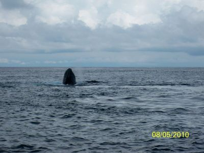 Yes, we saw whales on our fishing trip!