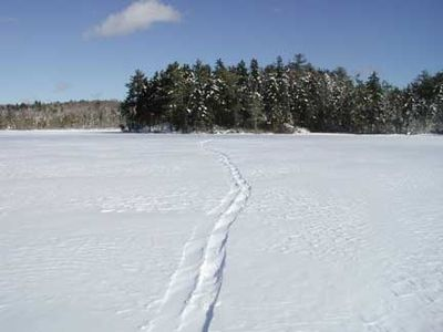 Snowshoe tracks on the ice on the Pond, February 2009.