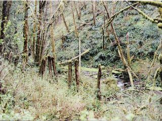 Coos Bay house photo - The old railroad pilings up the west fork are evidence of early logging