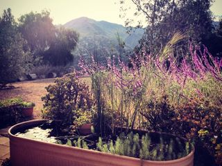 Enjoy a morning coffee by the pond with view of the canyon from the front patio