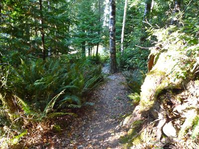 Crescent City cabin rental - Private trail to the river (seasonal)