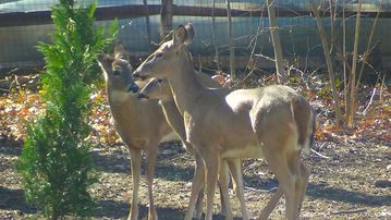 A sweet family of deer visit regularly to graze. All are welcome!