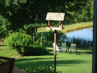 Middletown Springs house photo - Cardinals in the bird feeder