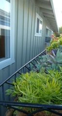 Santa Cruz house photo - One of many hanging plant gardens around the house- nice views from rooms.