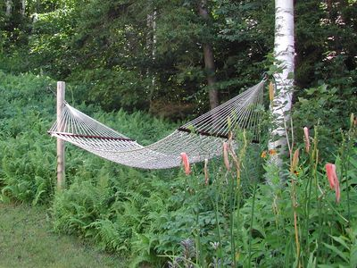 Back yard hammock