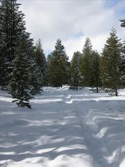 Tahoe Donner condo photo - This beautiful trail is just outside your door