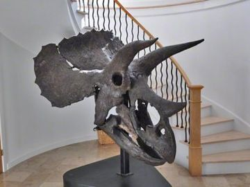 Entryway Has Large Dinosaur Collection, Including Triceratops Skull