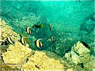 Bora Bora house photo - Our beautiful fish are waiting for you. They love to eat bread!