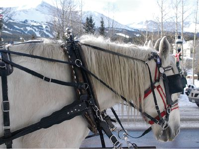 Take a horse-drawn carriage ride!