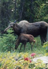 Anchorage house photo - Mom and Babe, just born nearby!