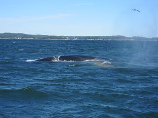 Cutler house photo - Whale watching in the Bay of Fundy - out of nearby Eastport
