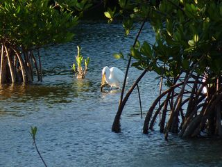Marathon villa photo - Egrets