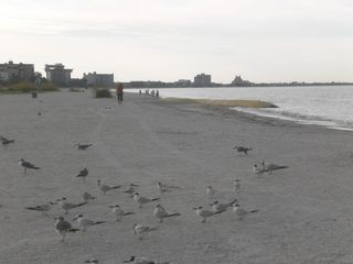 St Pete Beach condo photo - Peaceful walk with the seagulls at dawn!