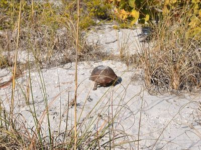 For those of you who don't know, this is a gopher tortoise.