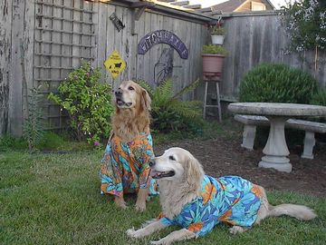 Well dressed doggies welcome!
