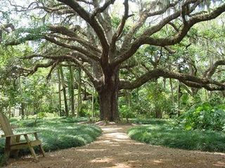 St. Augustine Beach house photo - Magnificent Oak at Washington Oaks State Park