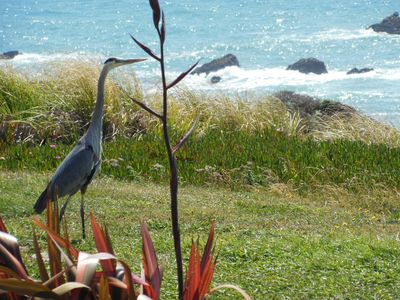 "Even this Great Blue Heron Loves the Views From ""Casa Bella""!"