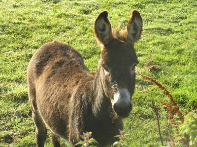 Connemara cottage rental - Donkey Neighbour