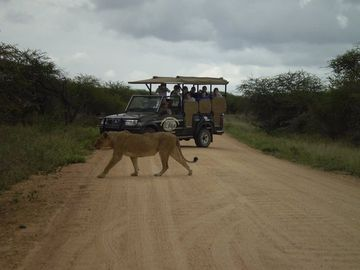 Game drive in Kruger with your own guide