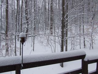Ithaca lodge photo - Front view of woods in winter