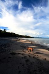 Montezuma villa photo - The beach is only 300 meters away, and is never crowded.