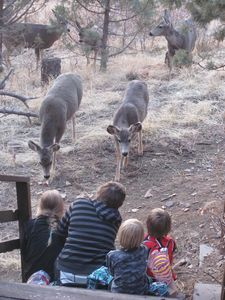 Adjacent to the Lincoln National Forest, deer sometimes visit the Cabin!