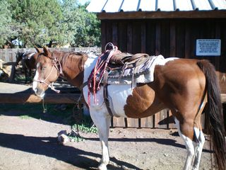Pinetop condo photo - Riding stables are a treat for the entire family