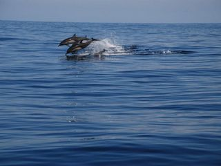 Huatulco condo photo - Whale & Dolphin tours - so much fun!