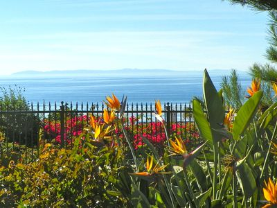 Dana Point condo rental - Flowers at Strand Vista Park with Catalina Island