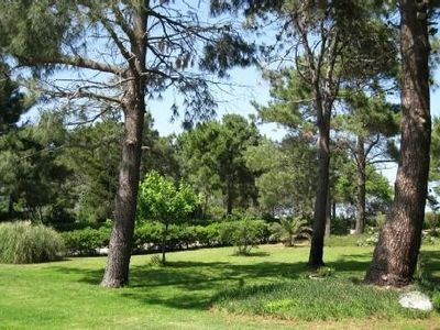 House in the heart of a pine forest, one minute walk from the seafront