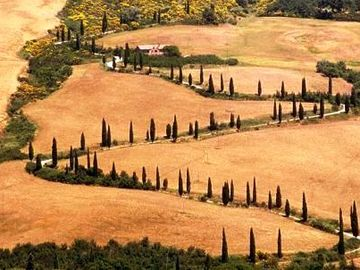Tuscan Wine Holidays