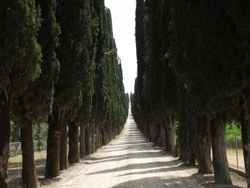 Cypress Alley in Arceno Estate