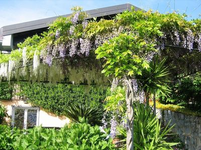 Living up to it's name Villa Wisteria