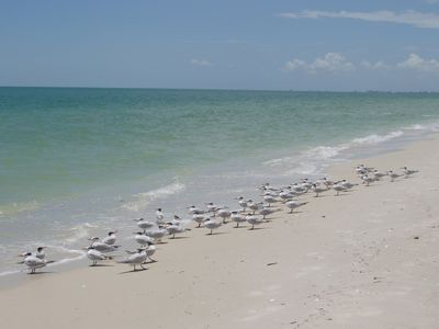 Fort Myers Beach condo rental - 'OK class, listen up!'