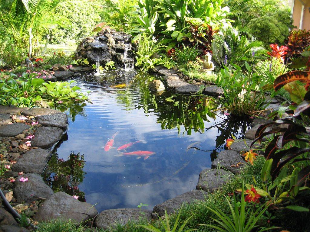 Ko olau country gardens hawaiian hales 2 or vrbo for Koi ponds and gardens