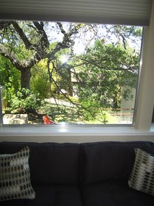 Austin house rental - View of lovely courtyard out of one of the living room windows