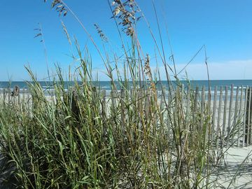 Dune grass along the walkways