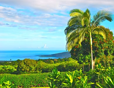 Secluded Elegantly Furnished Cottage with Panoramic Views of Kealakekua Bay