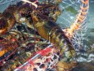 Stay here and enjoy lobsters - Harpswell house vacation rental photo