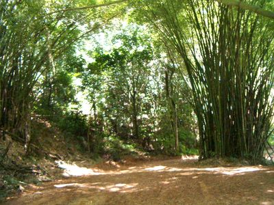 Mayaguez farmhouse rental - One of many walking trails