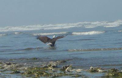 Seabrook house rental - Bald Eagle Family nerby