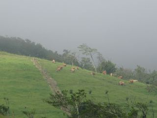 San Ramon villa photo - Rainy season clouds and cows grazing in valley.