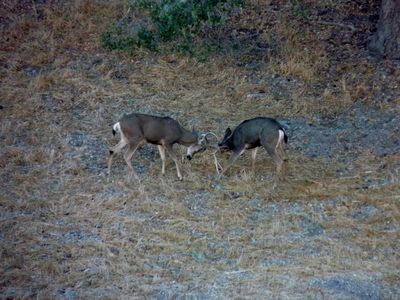 Young Bucks Practicing (Photo taken by guest from upper patio)