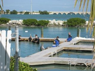 Duck Key villa photo - Dolphin Encounter at Hawk's Cay Resort