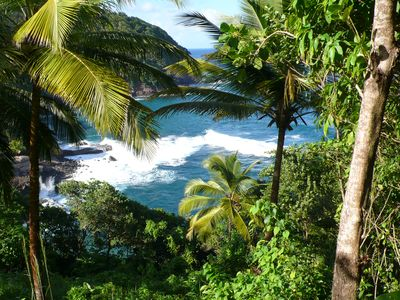 Wild tropical nature of Dominica